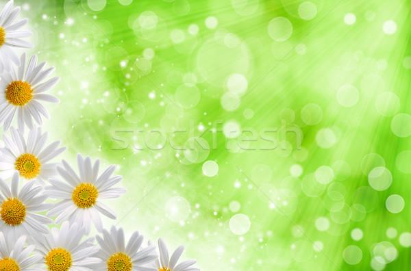 аннотация весны фоны Daisy цветы bokeh Сток-фото © tolokonov