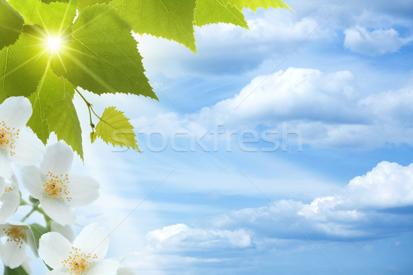 Jasmine. Abstract natural backgrounds against blue skies Stock photo © tolokonov
