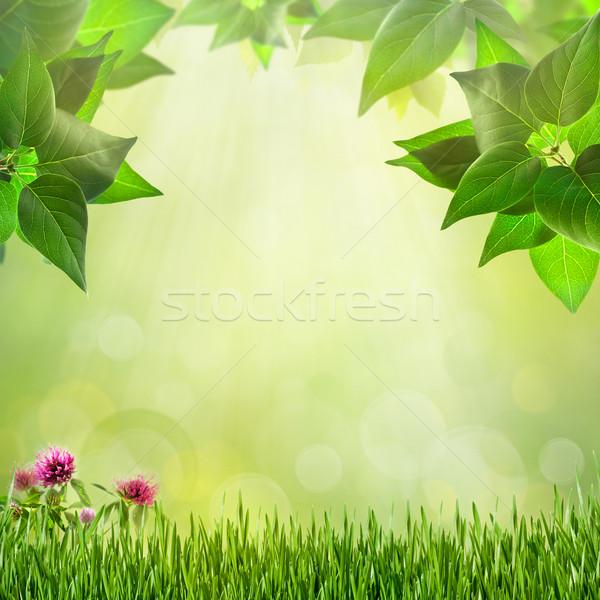 Abstract naturale sfondi design fiore primavera Foto d'archivio © tolokonov