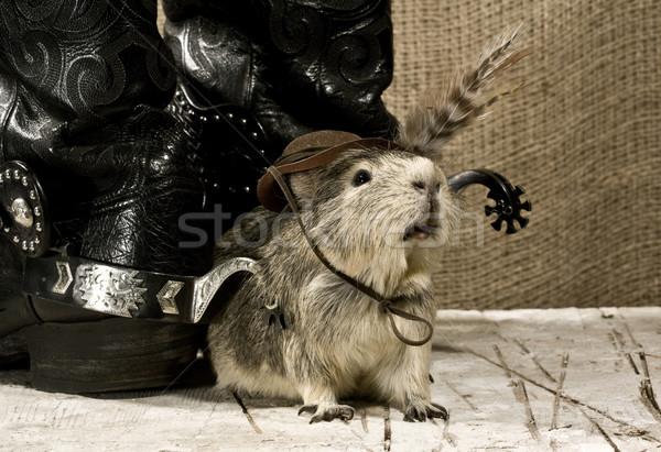 Shaggy guard. Western still life Stock photo © tolokonov