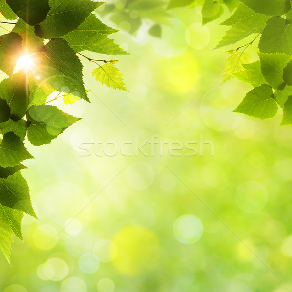 Whats a funny nice day! Abstract natural backgrounds Stock photo © tolokonov