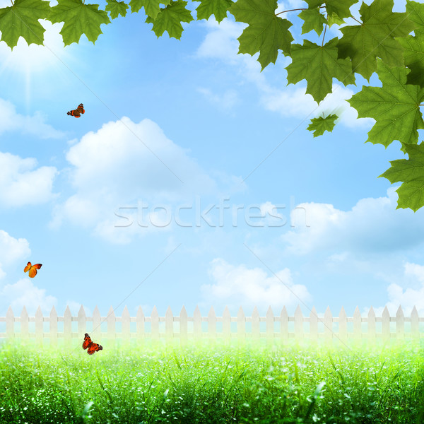 Summer farming landscape. optimistic summer view Stock photo © tolokonov
