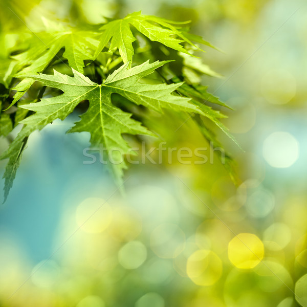 Green summer foliage, abstract natural backgrounds Stock photo © tolokonov