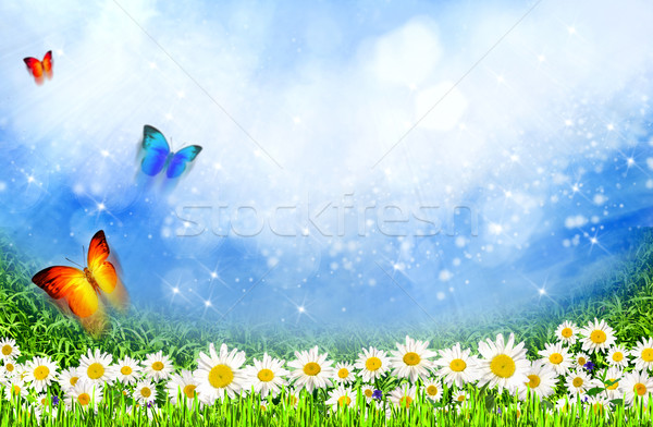 green field with daisy flowers under the sunlight as natural bac Stock photo © tolokonov