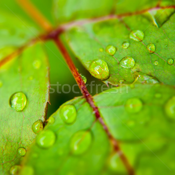 Green leaf with water droplets, abstract natural backgrounds Stock photo © tolokonov