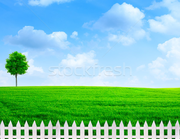 summer time outdoor rural view with white fence  Stock photo © tolokonov