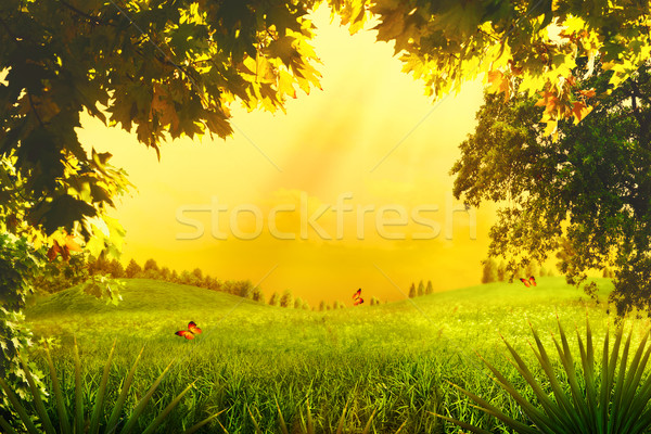 Magic Forest. Abstract environmental backgrounds for your design Stock photo © tolokonov