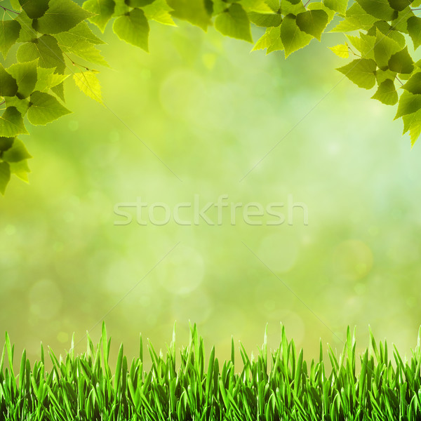 Beauty natural backgrounds for your design Stock photo © tolokonov