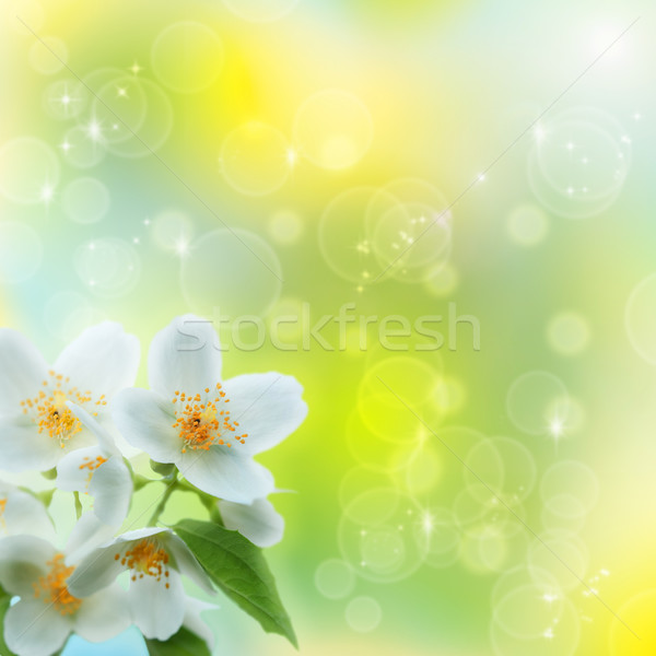 Jasmin flower as abstract natural backgrounds Stock photo © tolokonov