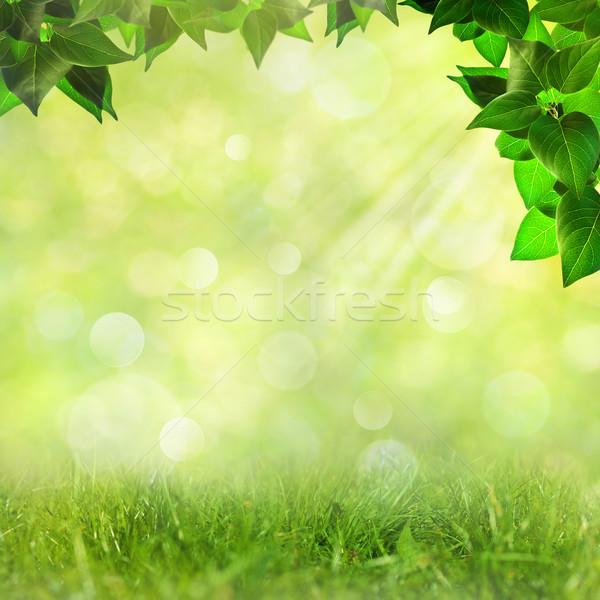 Resumen naturales fondos belleza bokeh cielo Foto stock © tolokonov