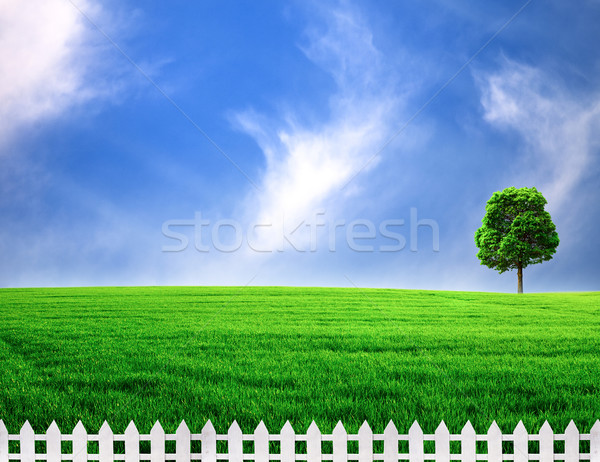 outdoor rural scene with white fence  Stock photo © tolokonov