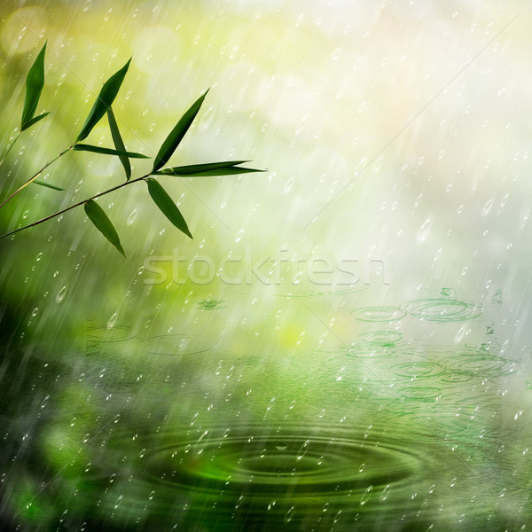 Misty rain in the bamboo forest. Abstract natural backgrounds Stock photo © tolokonov
