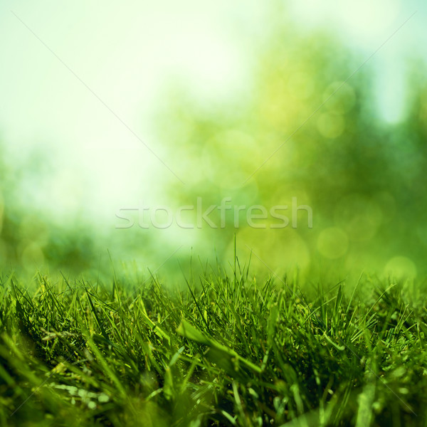 Abstract natural backgrounds with beauty bokeh Stock photo © tolokonov
