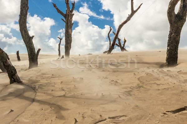 Polish dunes - Leba. Stock photo © tomasz_parys