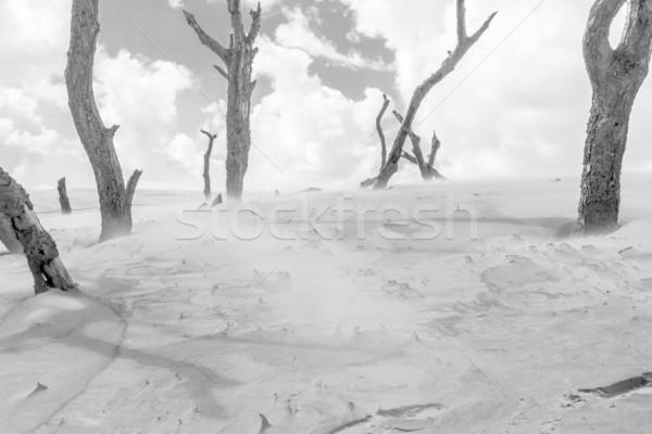 ünlü ağaç orman soyut manzara deniz Stok fotoğraf © tomasz_parys