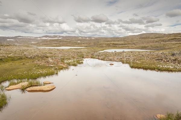 небольшой горные озеро Исландия мнение цветы Сток-фото © tomasz_parys