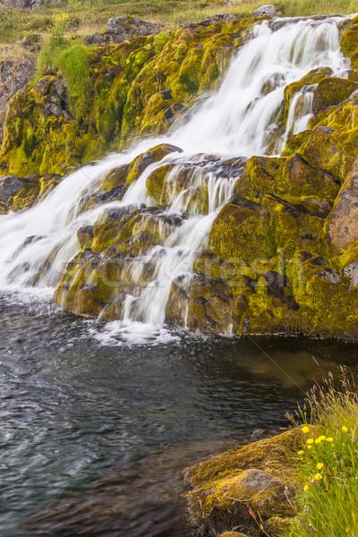 Tiszta víz vízesés Izland gyors folyó fű Stock fotó © tomasz_parys