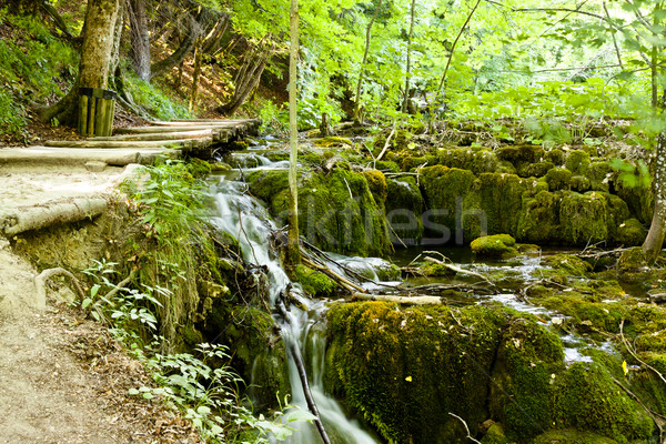 Beauty pleace - Plitvice lakes, Croatia Stock photo © tomasz_parys