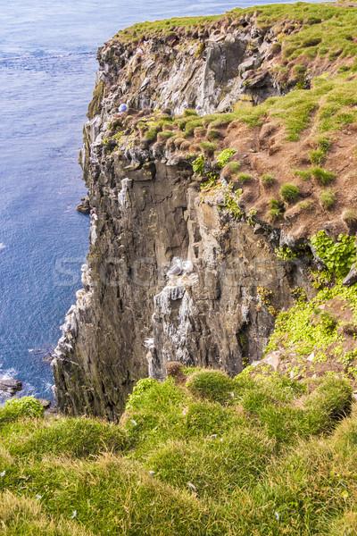 İzlanda uç Avrupa çim doğa manzara Stok fotoğraf © tomasz_parys