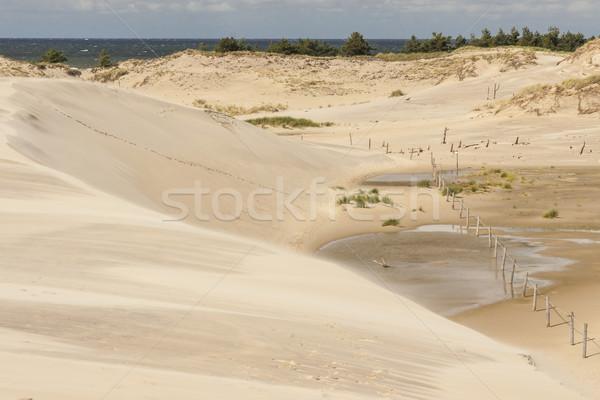 Arenoso beleza parque mar báltico paisagem mar Foto stock © tomasz_parys
