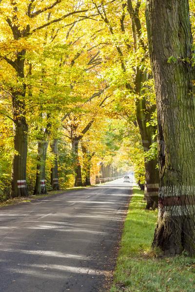 Stock photo: Empty route - autumn time.