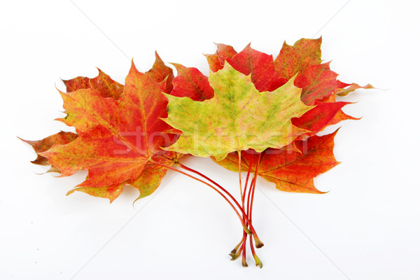leaves, fall Stock photo © Tomjac1980
