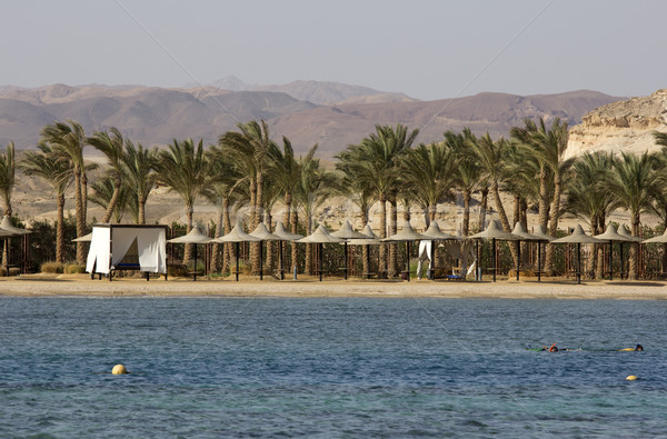 marsa alam in egypt Stock photo © Tomjac1980
