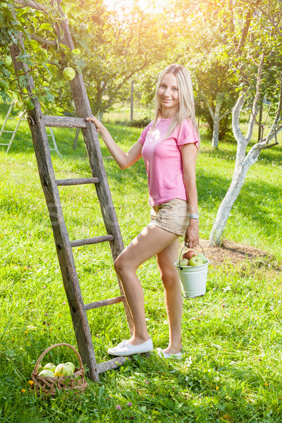 Young woman with a ladder picking apples from an apple tree Stock photo © tommyandone