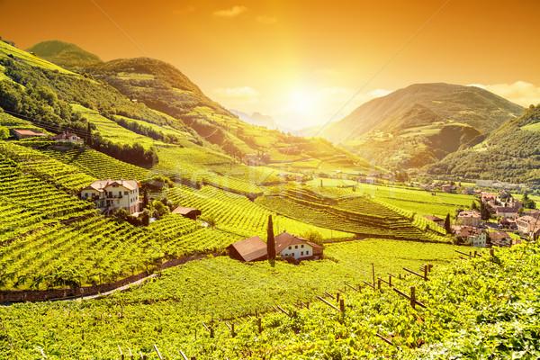 Stock fotó: Gyönyörű · naplemente · kilátás · szőlőskert · Olaszország · égbolt