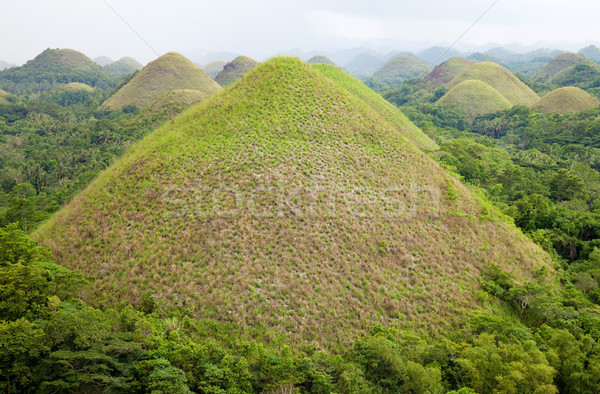 Chocolate Hills in Bohol Stock photo © tommyandone