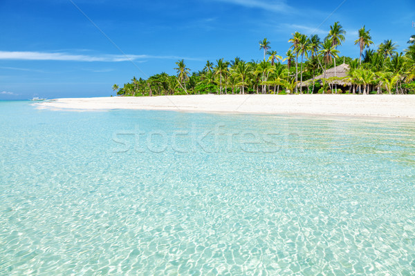 Fantastic turquoise beach with palm trees and white sand Stock photo © tommyandone