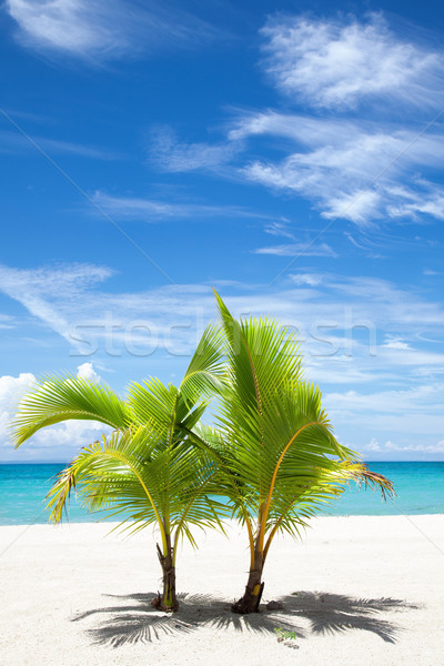 Palm trees on paradise island Stock photo © tommyandone