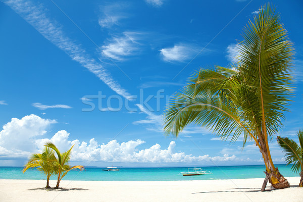 Palm trees on a tropical beach Stock photo © tommyandone