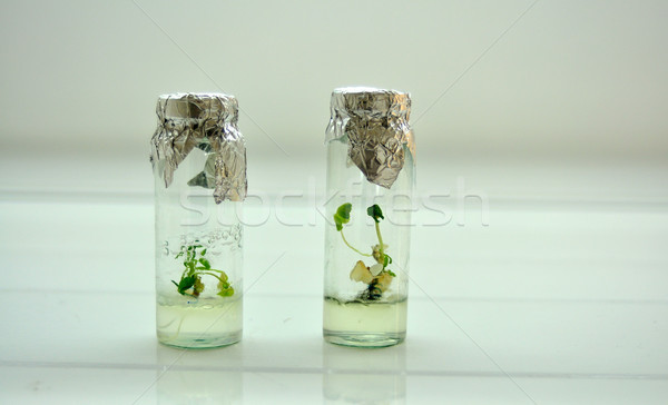 little plants in a jar Stock photo © tony4urban