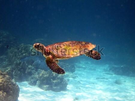 Stock fotó: Tenger · teknős · vízalatti · háttér · kék · sziluett