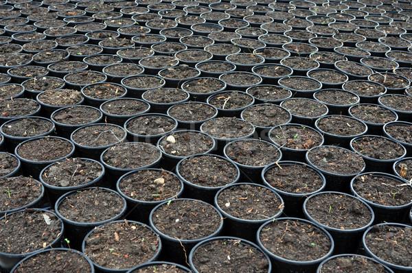 flowerpots in greenhouse Stock photo © tony4urban