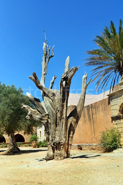 修道院 ツリー ギリシャ ギリシャ語 教会 ランドマーク ストックフォト © tony4urban