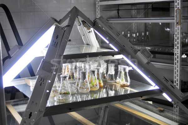 Genetisch engineering weinig planten laboratorium experiment Stockfoto © tony4urban