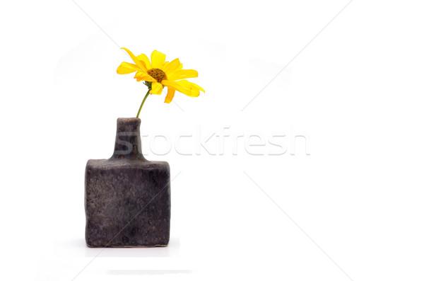 yellow flower Stock photo © tony4urban