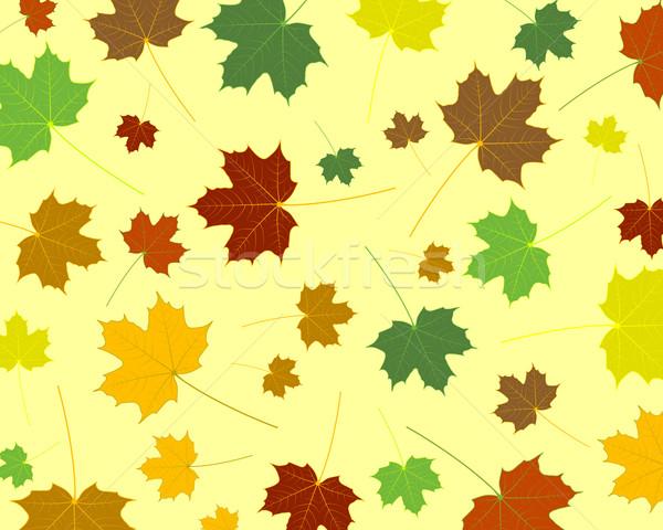 Akçaağaç yaprakları ağaç bahar orman dizayn Stok fotoğraf © toponium