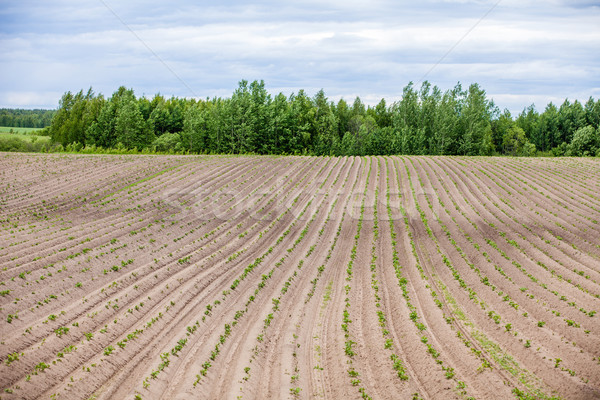 Country farm landscape - plowed field and trees. Agriculture beginning of spring. Stock photo © traza