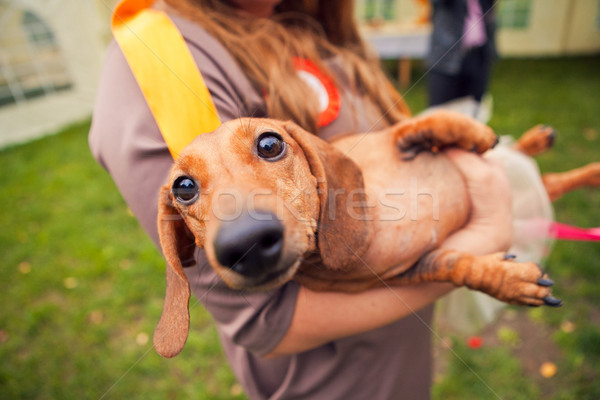 funny dog in the hands of women Stock photo © traza