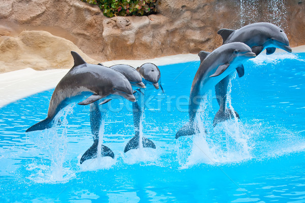 Dolphins Stock photo © trexec
