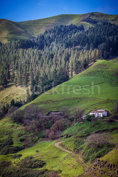 Green valley Stock photo © trexec