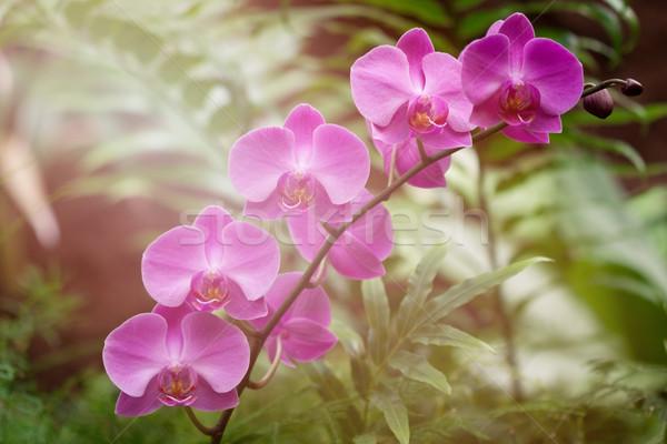 Roze orchidee bloem groene natuurlijke tuin Stockfoto © trexec