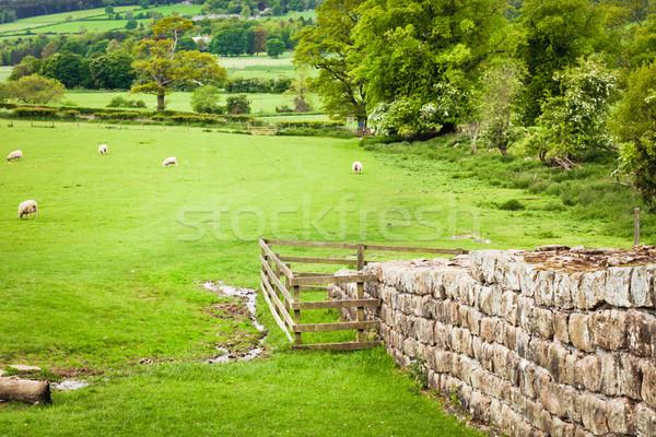 Duvar korunmuş bölüm ağaç çim doğa Stok fotoğraf © trgowanlock
