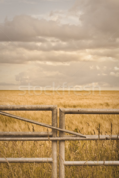 Farm gate Stock photo © trgowanlock