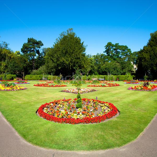 Summer garden Stock photo © trgowanlock