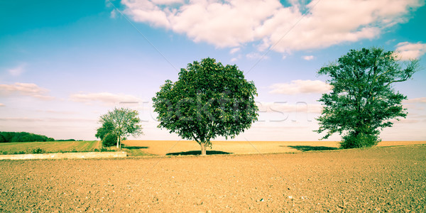 Wiejskie sceny piękna angielski Zdjęcia stock © trgowanlock
