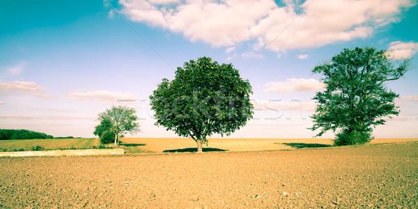 Scena rurale bella english Foto d'archivio © trgowanlock
